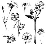 Hand drawn spring flowers Royalty Free Stock Photography