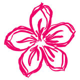 Hand drawn spring pink flower Royalty Free Stock Images