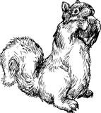 Hand drawn squirrel Royalty Free Stock Images
