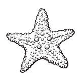 Hand drawn starfish, underwater living organism, sketch style vector illustration Royalty Free Stock Images