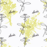 Hand drawn stevia branch and handwritten sign Royalty Free Stock Photos