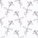 Hand drawn stevia branch outline seamless pattern Stock Image