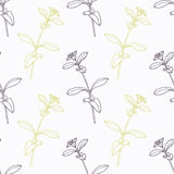 Hand drawn stevia branch stylized black and green Royalty Free Stock Image