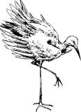 Hand drawn stork Stock Images