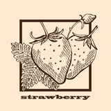 Hand drawn strawberries Stock Photography