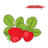 Hand drawn strawberries. Hand drawn strawberries with leaves and flower on white background. Vector illustration vector illustration