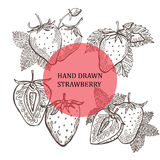 Hand drawn strawberry fruits Stock Photos