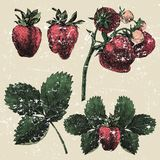 Hand drawn strawberry set Royalty Free Stock Images