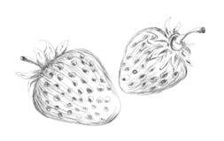 Hand drawn strawberry vector design Stock Photos