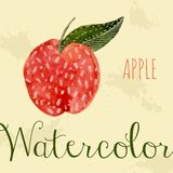 Hand drawn style watercolor apple. Nature. Fruct red color Royalty Free Stock Photo