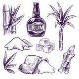 Hand drawn sugar cane. Sugarcane sweet leaves, sugar plant stalks, farm harvest, rum glass and bottle. Vintage engraving royalty free illustration