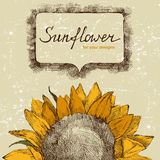 Hand drawn sunflower. Hand drawn background with sunflower Royalty Free Stock Photos
