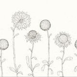 Hand drawn Sunflower. Floral background. Royalty Free Stock Photography