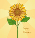 Hand drawn sunflower Stock Image