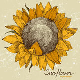 Hand drawn sunflower Royalty Free Stock Photos