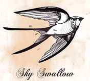 Hand drawn swallow bird vintage retro style. Stock Photography