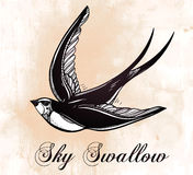 Hand drawn swallow bird vintage retro style. Stock Images