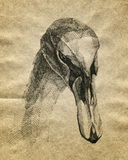 Hand drawn swan. On old paper Stock Images