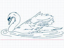 Hand drawn swan Stock Photos