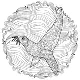 Hand drawn swimming seal with high details Royalty Free Stock Image