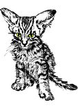 Hand-drawn tabby Stock Photo
