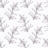 Hand drawn tarragon branch outline seamless Stock Image