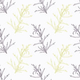 Hand drawn tarragon branch stylized  Royalty Free Stock Images