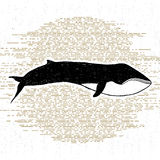 Hand drawn textured icon with fin whale vector illustration Royalty Free Stock Images