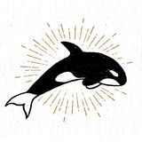 Hand drawn textured icon with killer whale vector illustration.  Royalty Free Stock Image