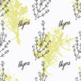 Hand drawn thyme branch and handwritten sign Stock Image