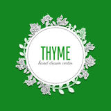 Hand drawn Thyme branch with leaves doodle sketch isolated on white, vector round frame wreath, Healing herb, Botanical. Hand drawn Thyme branch with leaves Stock Photo