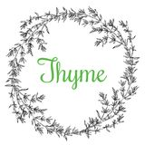 Thyme plant wrench. Hand drawn thyme  plant wrench with leaves isolated on white background. Vintage  spicy herbs sketch.  Doodle cooking ingredient, seasoning Stock Photography