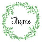 Thyme plant wrench. Hand drawn thyme  plant wrench with leaves isolated on white background. Vintage  spicy herbs sketch.  Doodle cooking ingredient, seasoning Royalty Free Stock Image