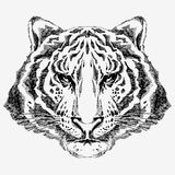 Hand Drawn Tiger Stock Images