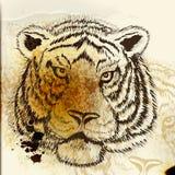 Hand drawn tiger portrait Royalty Free Stock Photos