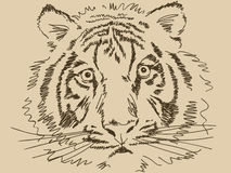 Hand drawn tiger. Vector illustration Stock Image
