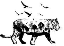 Hand drawn Tiger for your design, wildlife concept Stock Image