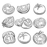 Hand drawn tomato set. Stock Photography