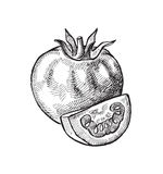 Hand drawn of tomato Stock Photography