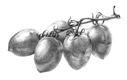 Hand drawn tomatoes brunch Royalty Free Stock Photo