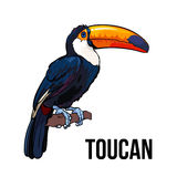 Hand drawn toucan seating on a tree branch, vector illustration. Hand drawn toucan seating on a tree branch, colorful sketch style vector illustration isolated Royalty Free Stock Photography