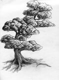 Hand drawn tree. A single curved tree. Pencil drawing, sketch Royalty Free Stock Photo