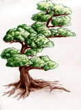 Hand drawn tree. A single curved tree. Colored pencil drawing, sketch Royalty Free Stock Photo
