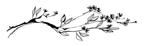 Hand drawn tree branch with leaves and flowers painted by ink. Grunge style vector illustration. Sketch black image on white backg stock illustration