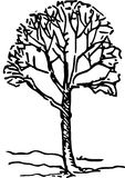 Hand Drawn Tree Royalty Free Stock Image