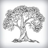 Hand drawn tree symbol. Isolated vector illustration