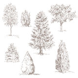 Hand drawn trees Stock Photo