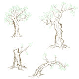 Hand drawn trees Stock Images