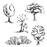 Hand drawn trees set. Isolated and vintage  sketch trees Royalty Free Stock Photo