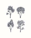 Hand drawn trees Royalty Free Stock Photos